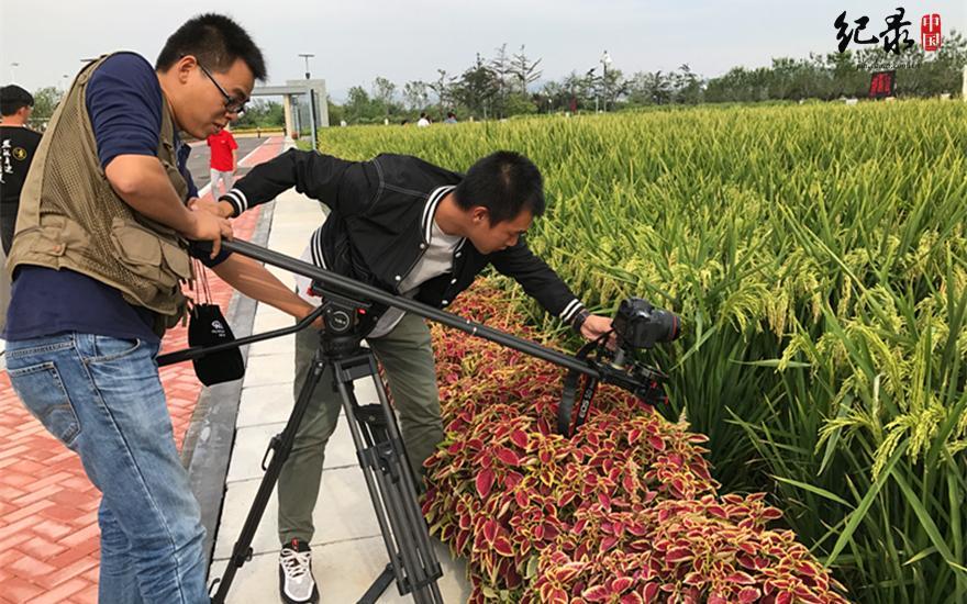 难得深入青岛院士港,了解并拍摄占地40亩的海水稻研发基地,摄影师格外珍惜这次机会,全神贯注拍摄中。(中国网纪录中国摄影师们聚精会神拍摄中 张宇鹏摄)
